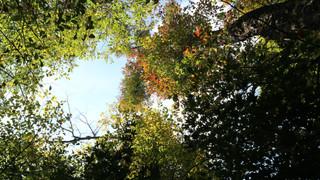 14:00 木漏れ日の下で 軽井沢