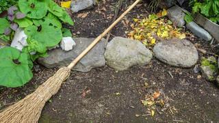 落ち葉は土に還り、また葉に戻る #日光門前に暮らす #2