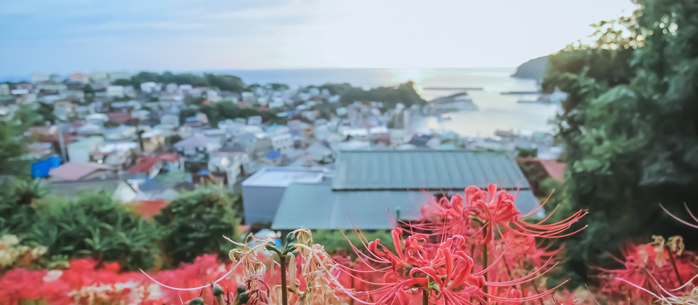 彼岸花の咲く、海の見える丘のまち