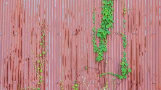 07:00|ぶどうのまち|伸びる蔓。自然がつくるテクスチャー
