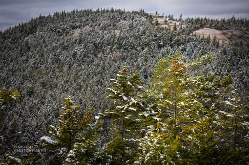 White Mountains-16.jpg
