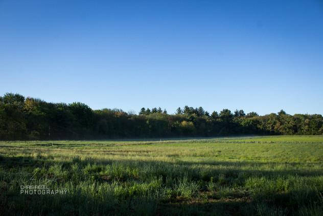 Walden Pond-4.jpg
