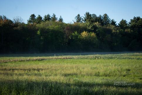 Walden Pond-17.jpg
