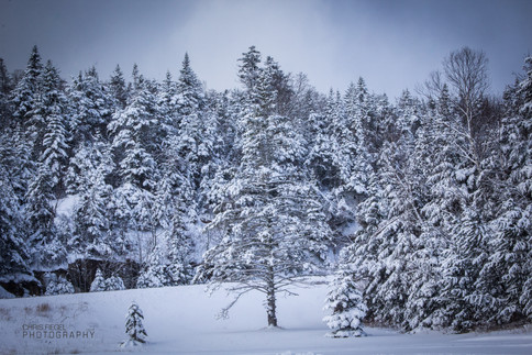 White Mountains-10.jpg