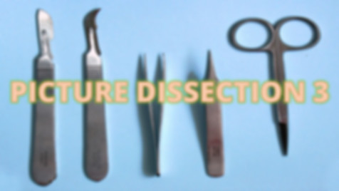 Picture Dissection 3.jpg