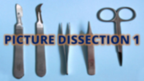 Picture Dissection 1 test.jpg