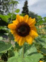 photo_2019-08-16 23.30.26.jpeg