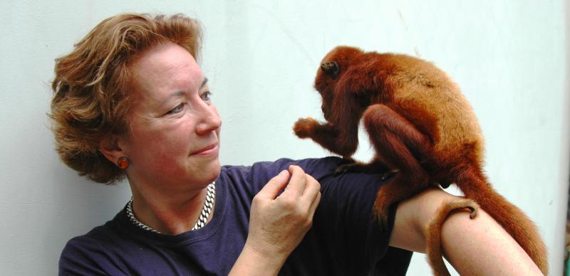 Mono aullador joven