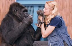 Gorila Koko y entrenadora