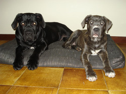 jet and cleo as puppies