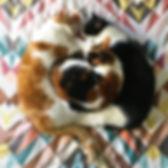 Cuddle Puddle.jpg