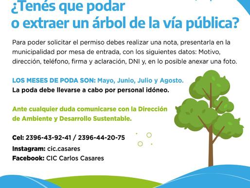 ¿Sabías que para podar o extraer un árbol de la vía pública debes pedir permiso al municipio?