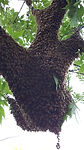 Hive Location pic for website.jpg