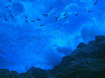 Se crea la Reserva Nacional Dorsal de Nazca