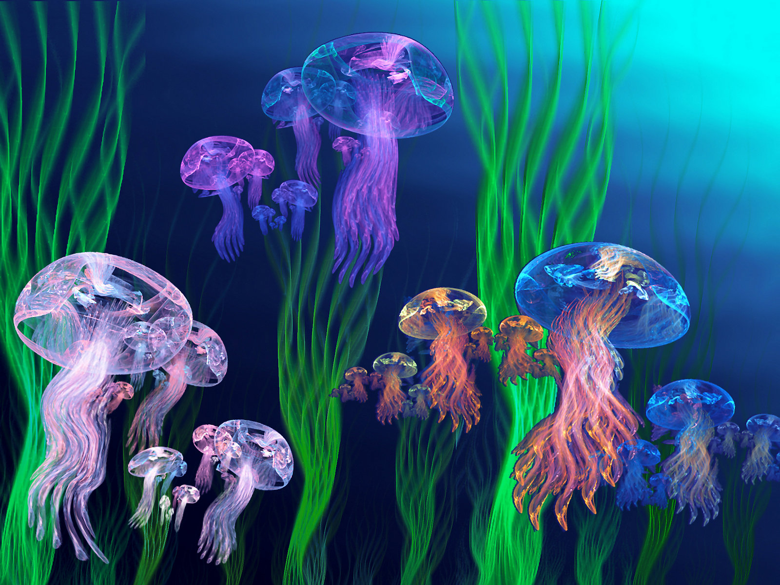 Jelly Armada