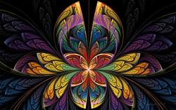 Butterfly Splits