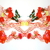"""Bacon Wreath No. 2 Watercolors on paper 24"""" x 42"""""""