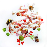 """Bacon Wreath with Bees and Figs Watercolors on paper 32"""" x 33"""""""