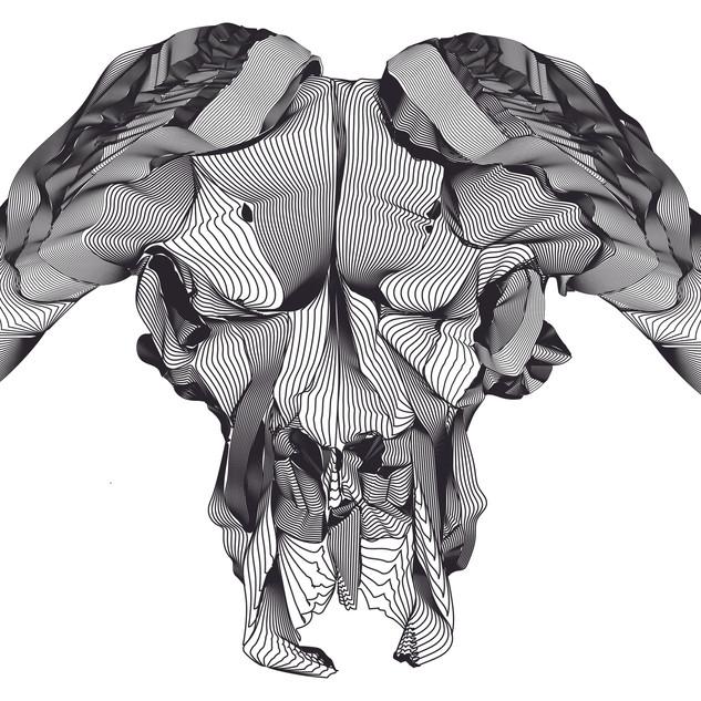"Intro to Digital Design, Project: Adobe Illustrator Contour Line Skull Study Adobe Illustrator CC File 11"" x 17"""