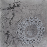 """Potential Perspectives graphite and charcoal on paper 18"""" x 18"""" 2010"""
