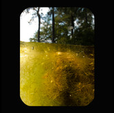 Holly Lake: Yellow Tangles 2011 INKJET ON PAPER 40x32 inches