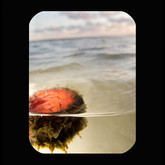 Galveston: Red Bottle Cap 2011 INKJET ON PAPER 40x32 inches