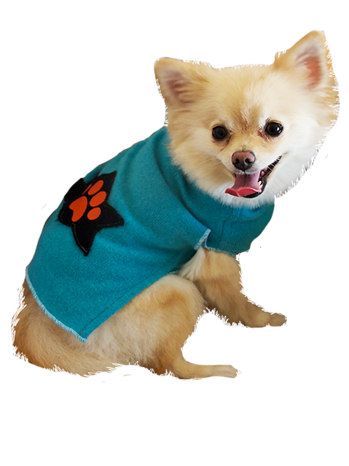 Sweater Lily- Turquoise
