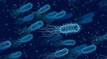 bacteria-3662695_1920_small.jpg