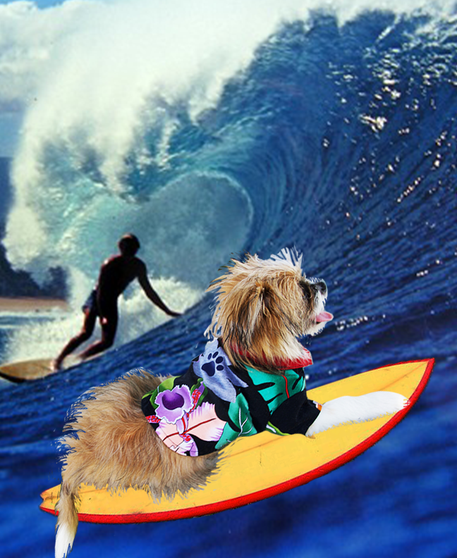 Surfer Lily