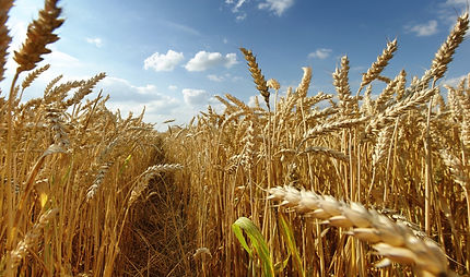 Lethbridge Agriculture