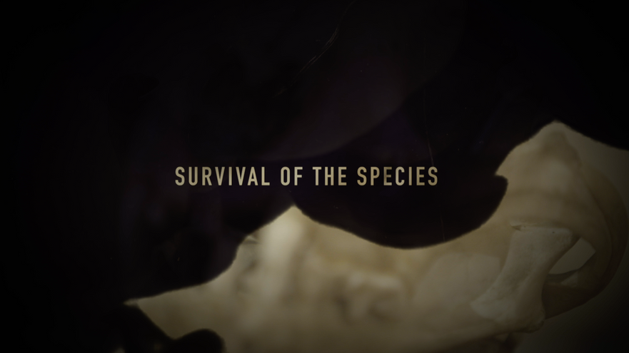 Survival Of The Species
