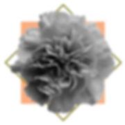 Toni Roack ~ Carnation
