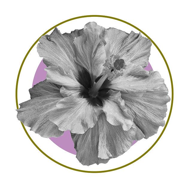 Toni Roack ~ Hibiscus