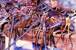 Crawfish Bench, Potters Cay Market