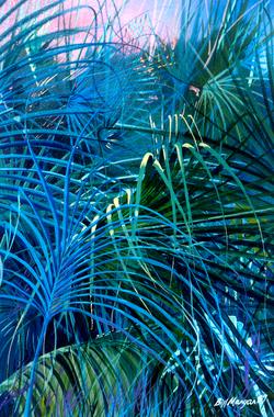 Fine Palms