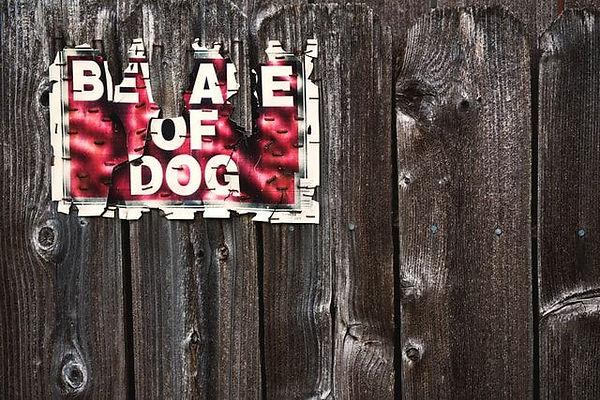 Beware-of-Dog-compressor.jpg