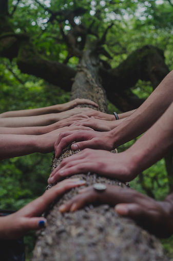 forest bathing group sessions.jpg