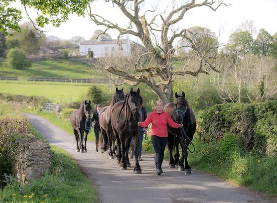 Meet the horses leading down road.jpg