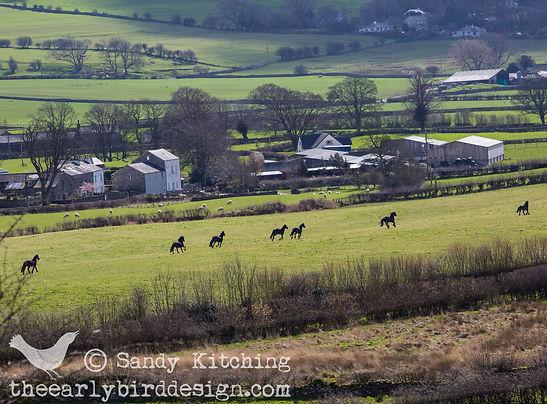 Horses 14 acre 2014.jpg