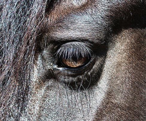 Bailey_horses_May_2016-5528.jpg