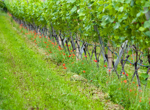 An Introduction to Natural Wine