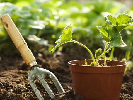 15 Best Gardening & Landscaping Tips for Beginners!