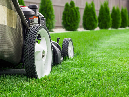 Top 10 Best Lawn Mowing Services in Cairns