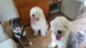 Stanley, Jessie and Winston