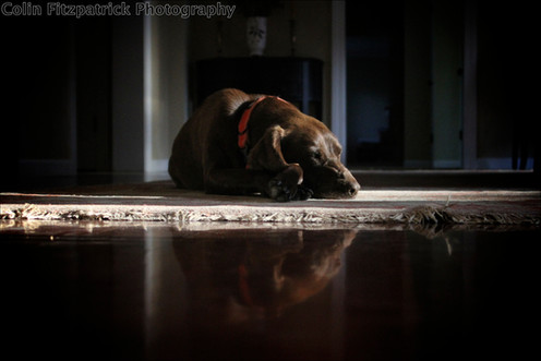 Cross legged dog