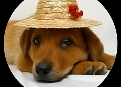 Puppy n' Hat