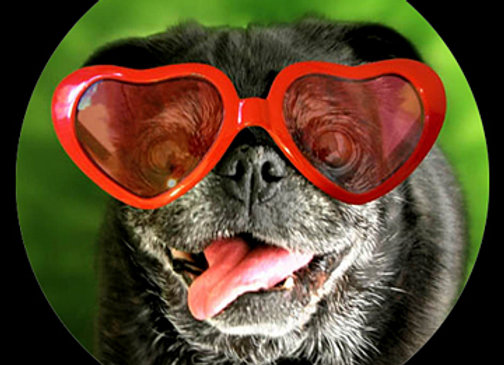 Pug Glasses