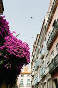 Lissabon, Lisbon pink flowers, old city