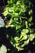 Salat im Schrebergarten #portugiesischerezepte #portugiesischkochen #portugiesischessen
