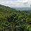 Thumbnail: Costa Rica Tirra Estate F1